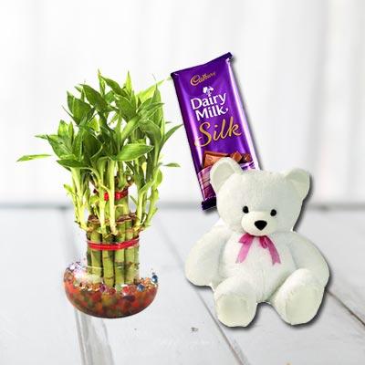 Lucky Bamboo, Cadbury Silk With Teddy