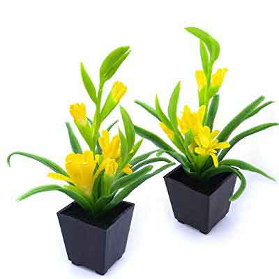 Tuberose Flowers Plant