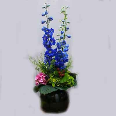 Delphinium Flowers Plant