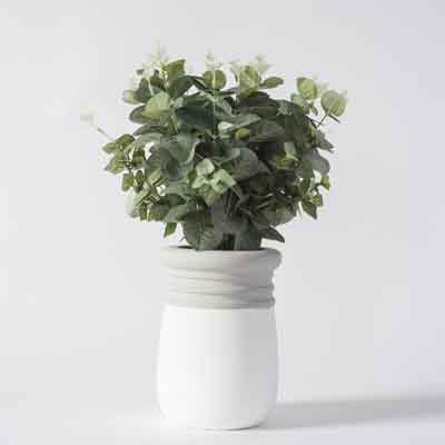 Eucalyptus Flowers Plant
